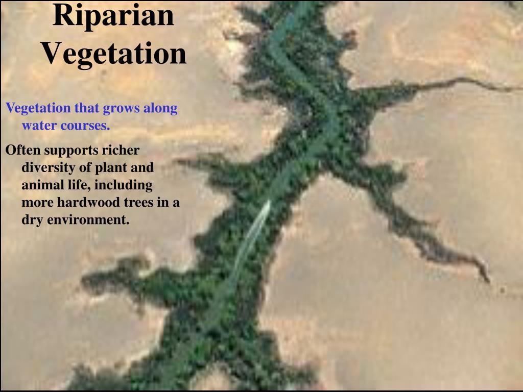 Riparian Vegetation