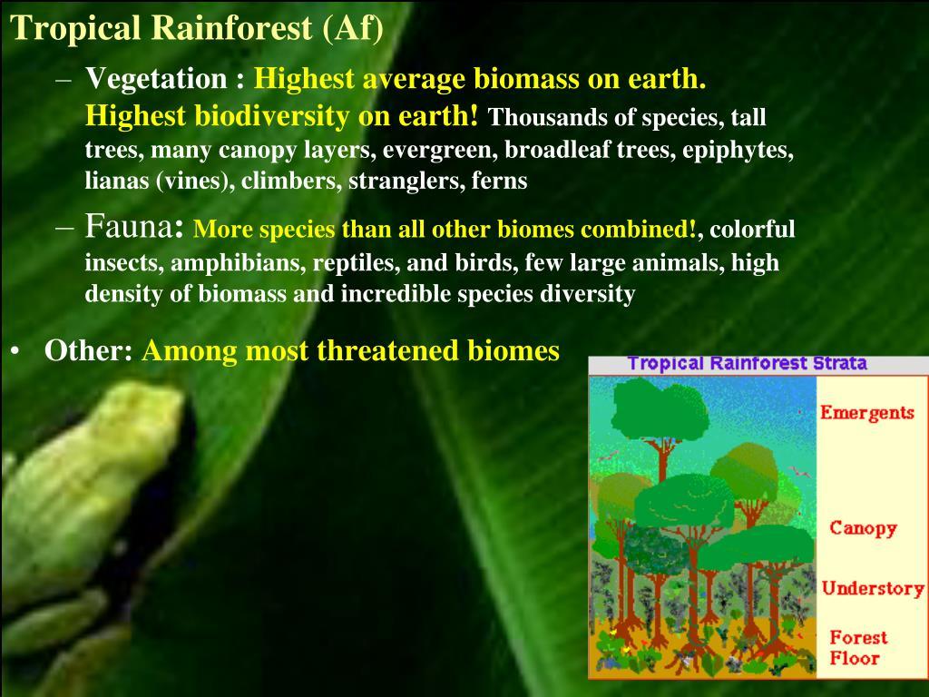 Tropical Rainforest (Af)