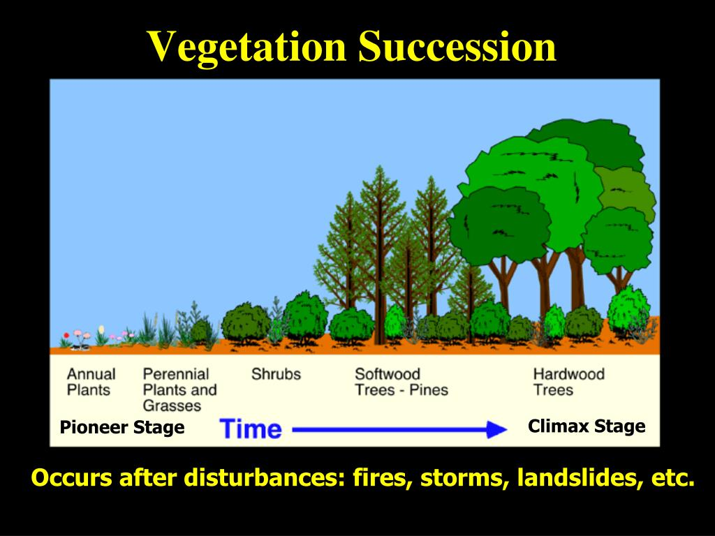 Vegetation Succession