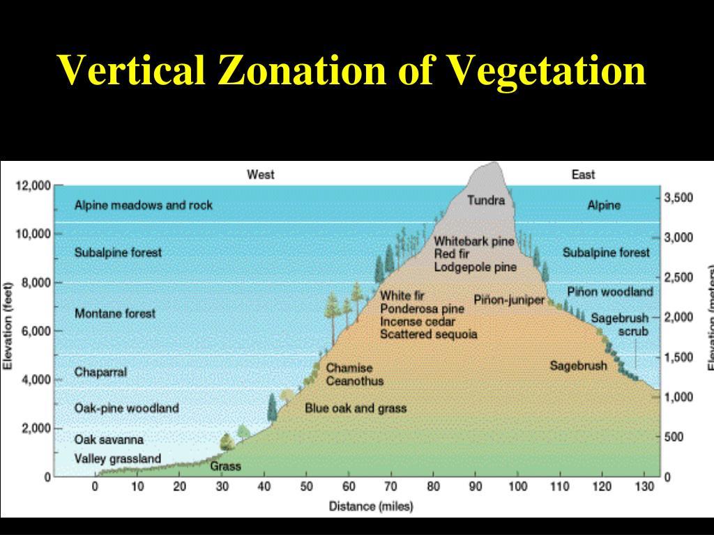 Vertical Zonation of Vegetation