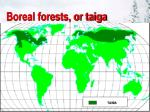 boreal forests or taiga94