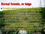 boreal forests or taiga96