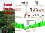 boreal forests or taiga99
