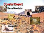 coastal desert32