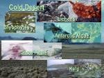 cold desert37
