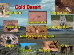 cold desert39