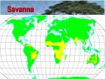 savanna43