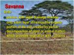 savanna45