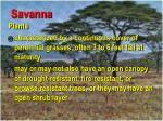 savanna46