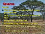 savanna47
