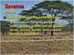 savanna48