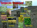 temperate grassland57