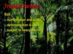 tropical forests77