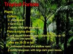 tropical forests78