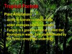tropical forests79