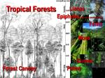 tropical forests80