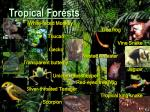 tropical forests81
