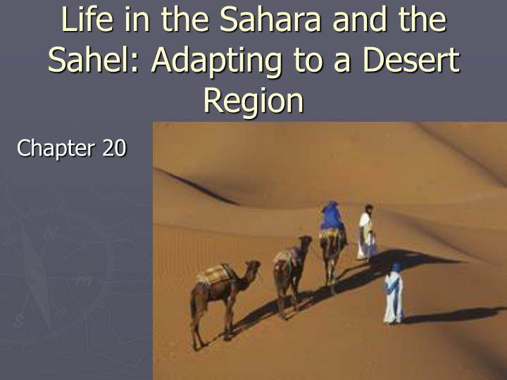 life in the sahara and the sahel adapting to a desert region n.
