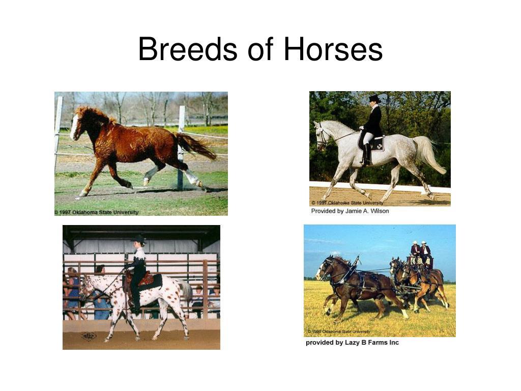 breeds of horses l.