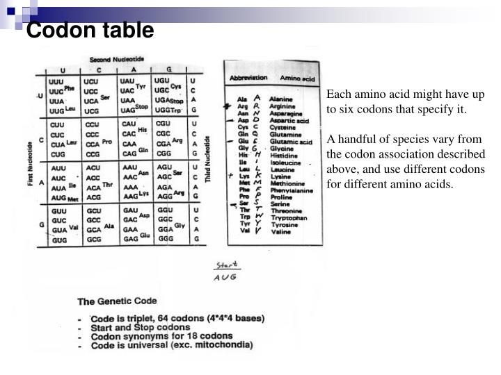 Codon Amino Acid Abbreviations Part - 12: Each amino acid might have up to six codons that specify it.