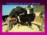 collection on a live mount6