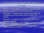 terms associated with forestland wildlife