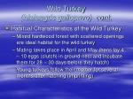 wild turkey meleagris gallopavo cont21