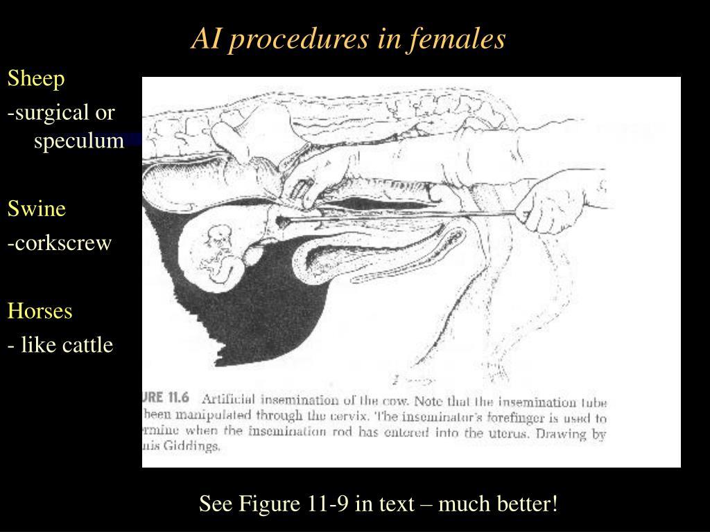 AI procedures in females