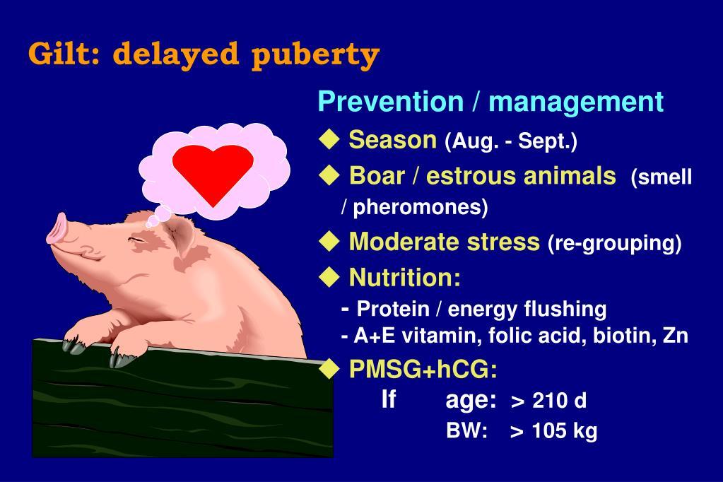Gilt: delayed puberty