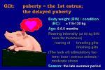 gilt puberty the 1st estrus the delayed puberty11