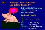 gilt puberty the 1st estrus the delayed puberty8