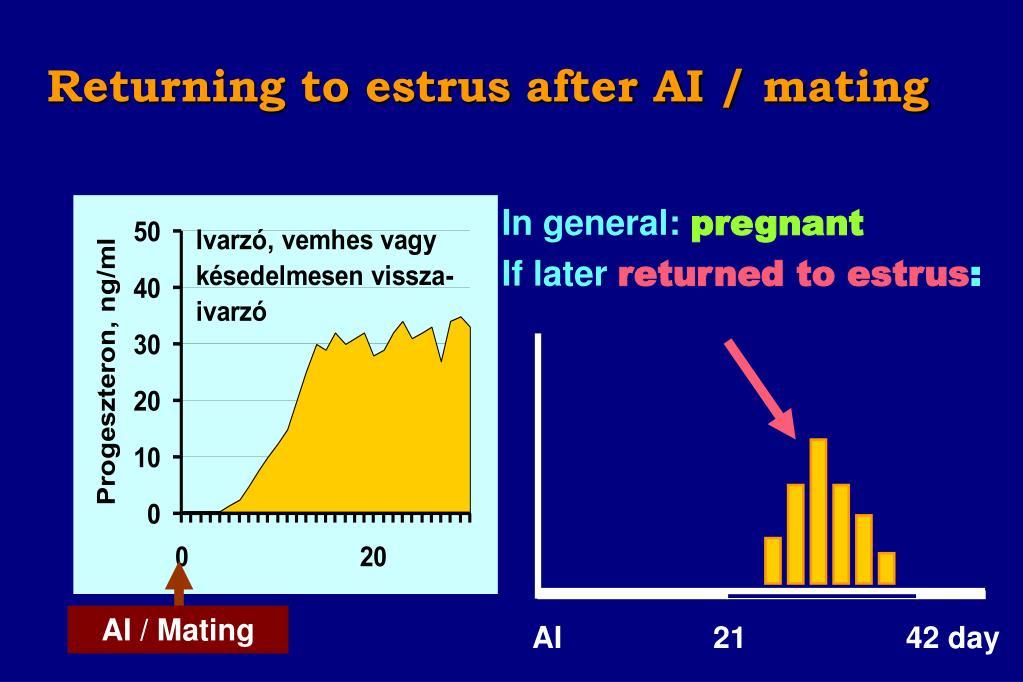 Returning to estrus after AI / mating