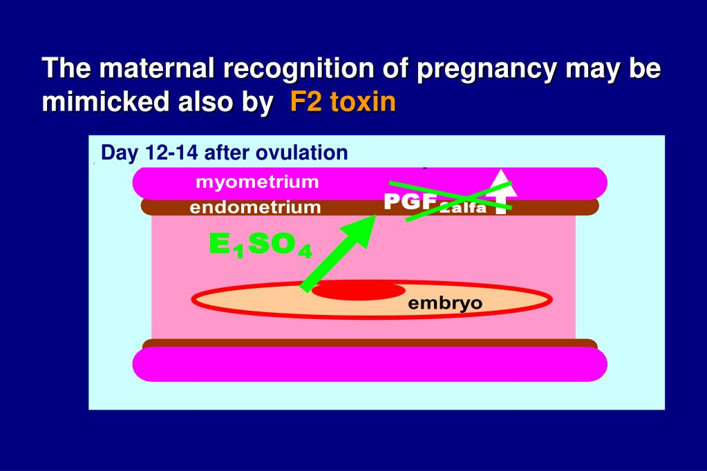 The maternal recognition of pregnancy may be mimicked also by
