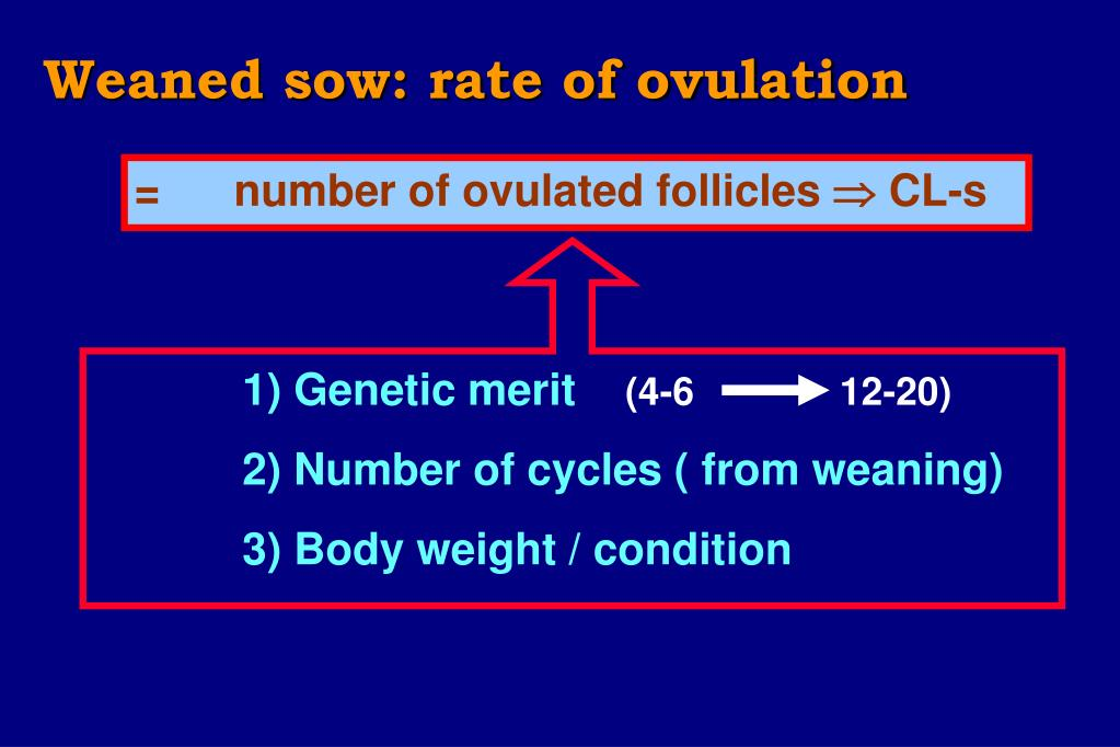 Weaned sow: rate of ovulation