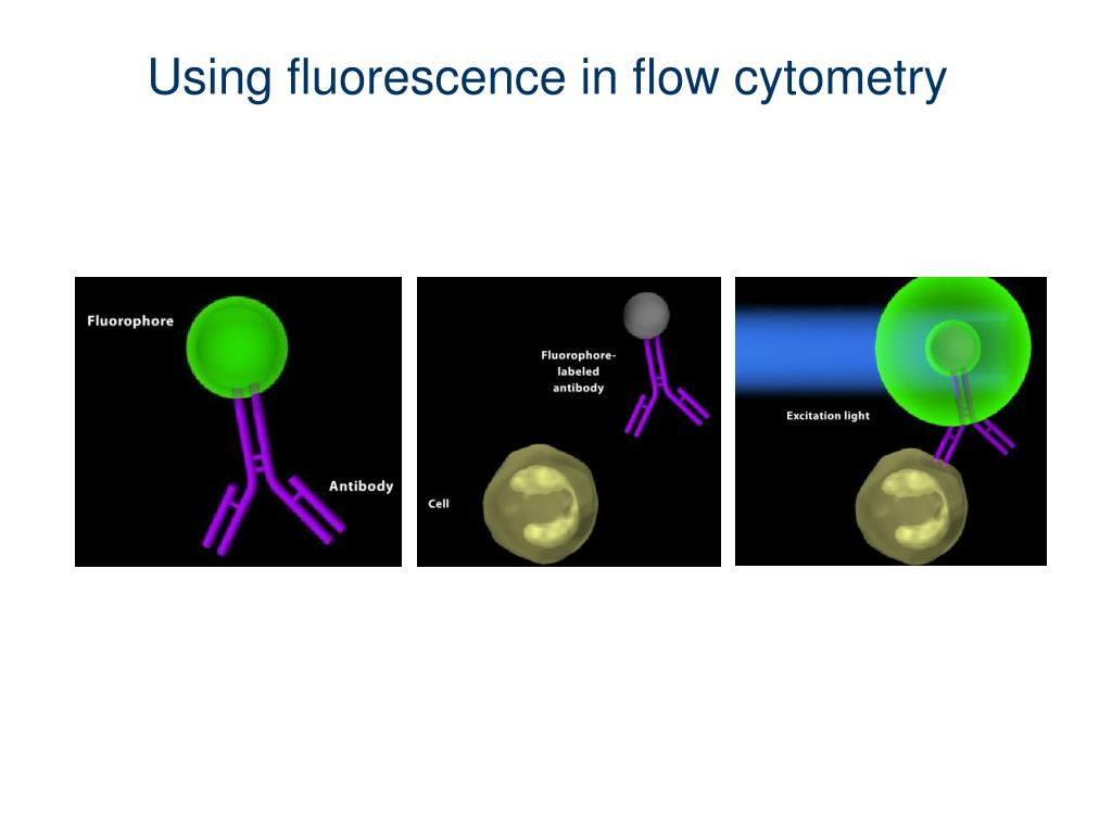 Using fluorescence in flow cytometry