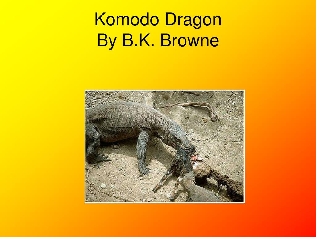 komodo dragon by b k browne l.