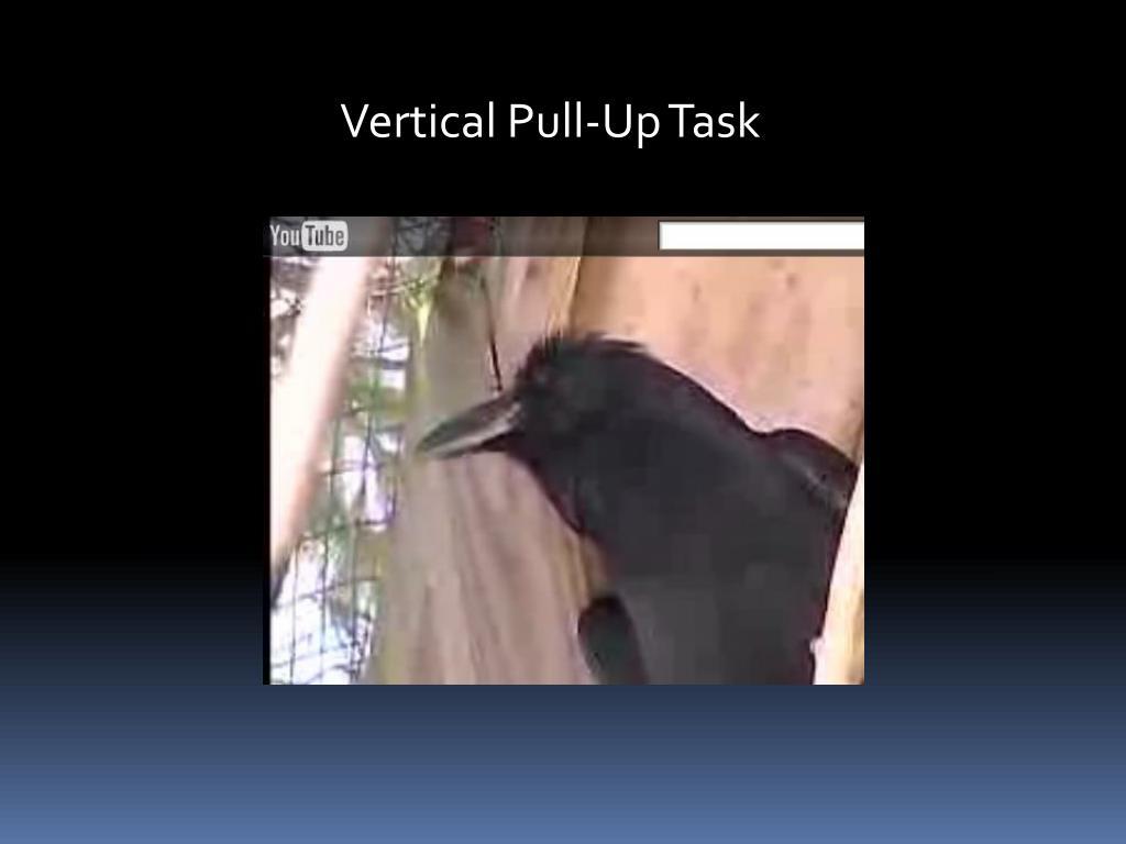 Vertical Pull-Up Task