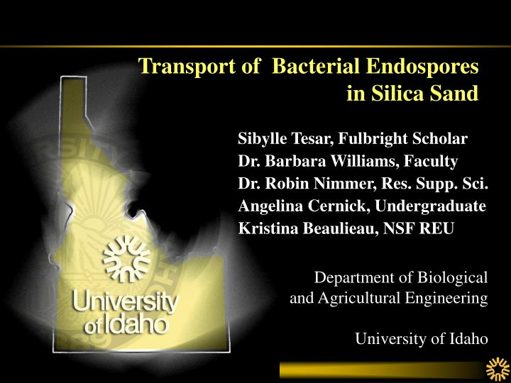 transport of bacterial endospores in silica sand n.