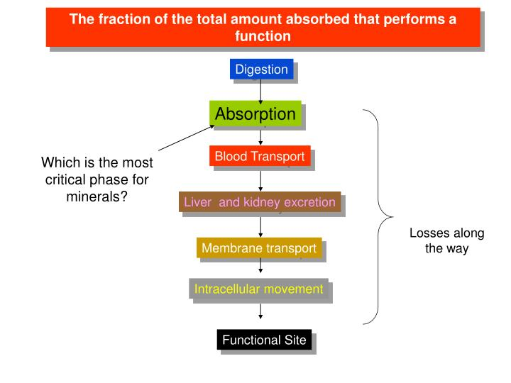 The fraction of the total amount absorbed that performs a function