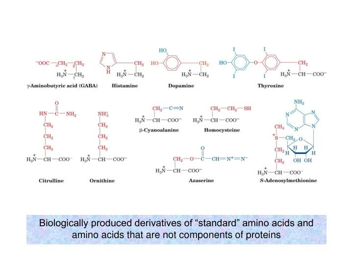 """Biologically produced derivatives of """"standard"""" amino acids and amino acids that are not components of proteins"""