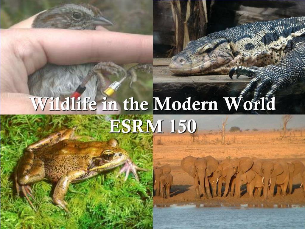 wildlife in the modern world esrm 150 l.