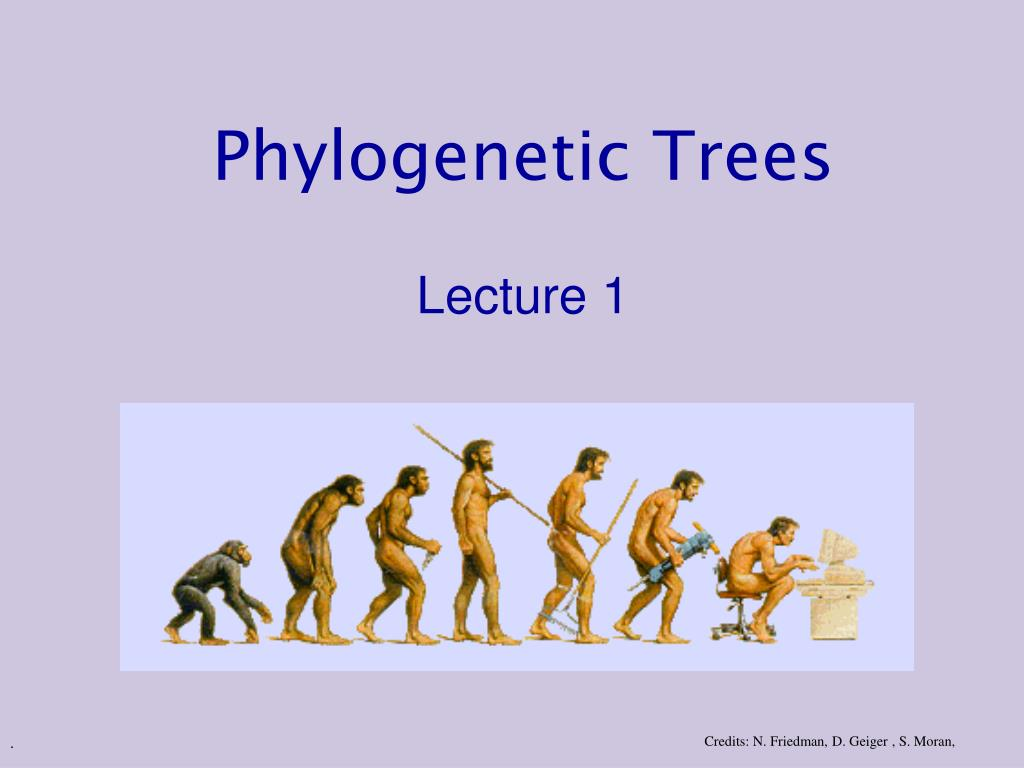 phylogenetic trees lecture 1 l.