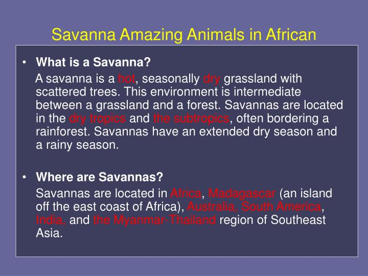 Savanna amazing animals in african