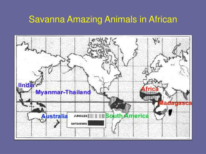 Savanna amazing animals in african3