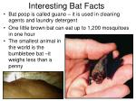 interesting bat facts
