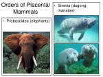 orders of placental mammals35