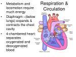 respiration circulation