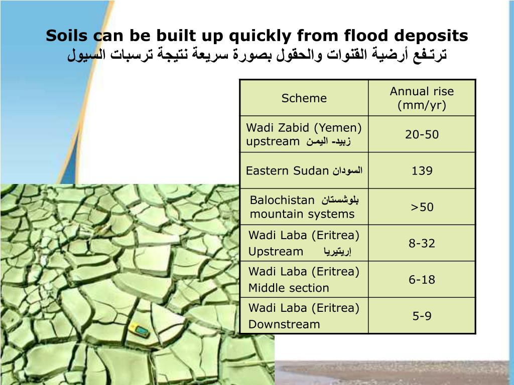 Soils can be built up quickly from flood deposits