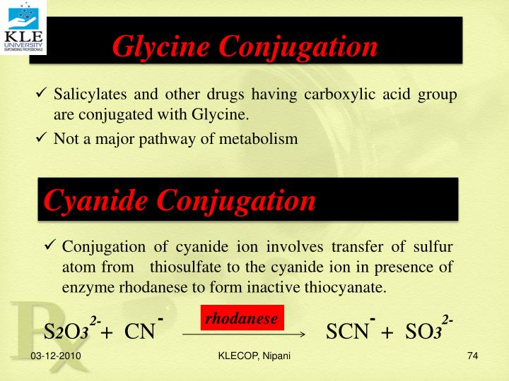 Glycine Conjugation