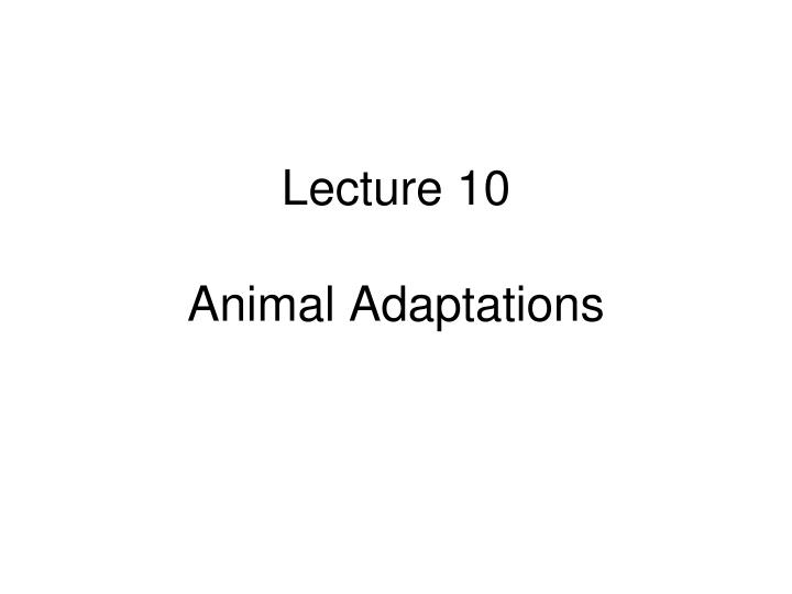 Lecture 10 animal adaptations